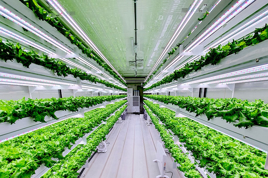 Smart Acres aims to improve food security in the UAE