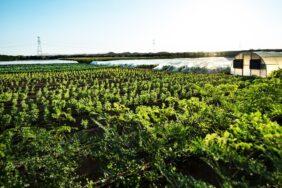 Carrefour partners with Emirates Bio Farm