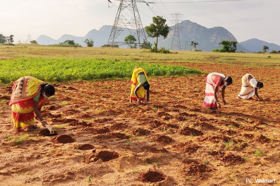 Walmart Foundation helps India's smallholder farmers with grants